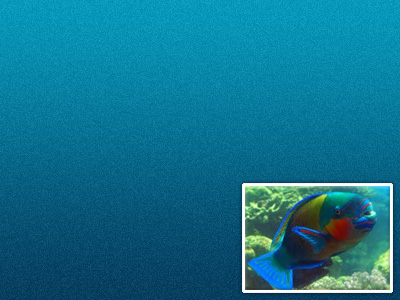 Parrot Fish Color